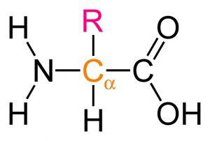 Exemplo de uma cadeia de aminoácido